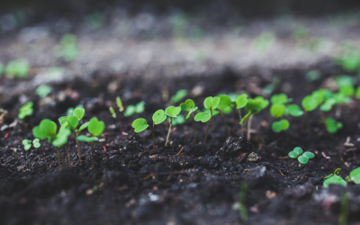Psychological Health and Safety at Work: Growing from the ground up